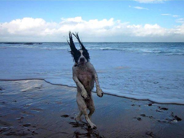 Удачные фото хозяина с собаками 9