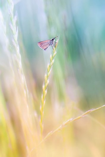 макро фото природы