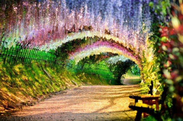 Красивая Япония