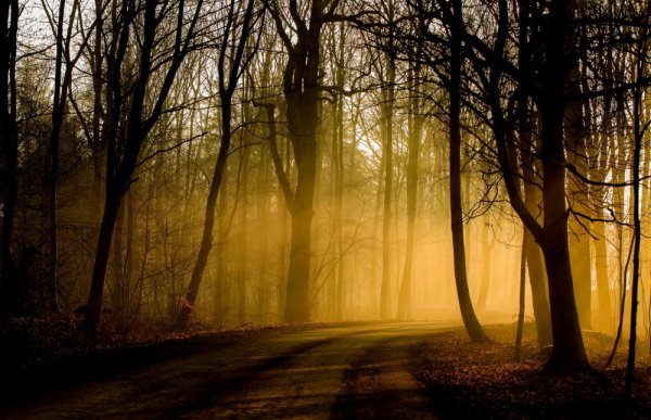 Осенние пейзажи