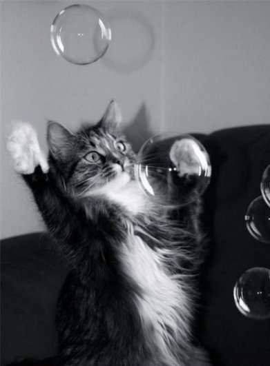 мыльные пузыри фото