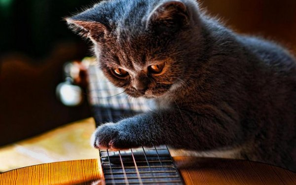 Милые коты