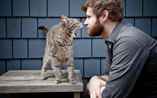 милые коты фото