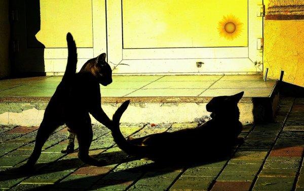 Кошачьи карты