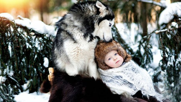 Лучшая собака для ребенка 7