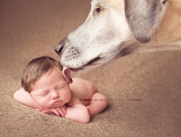Лучшая собака для ребенка 11