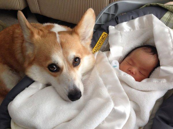 Лучшая собака для ребенка 19