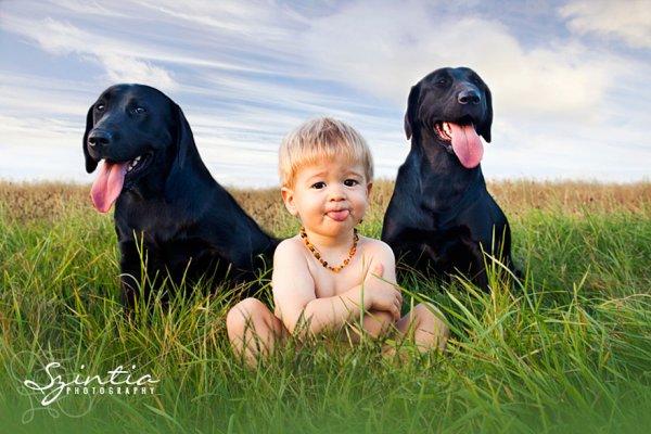Лучшая собака для ребенка 27