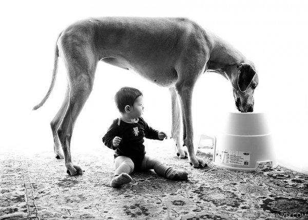 Лучшая собака для ребенка 31