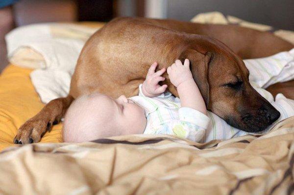 фото собак и детей 5