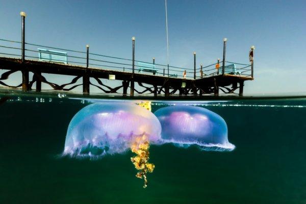 Подводный мир