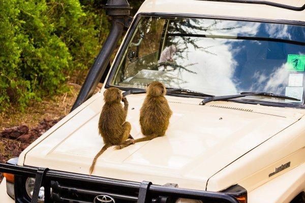 Моё путешествие по национальным паркам Танзании... - №9