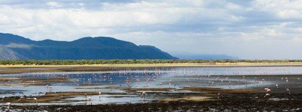 Моё путешествие по национальным паркам Танзании... - №13