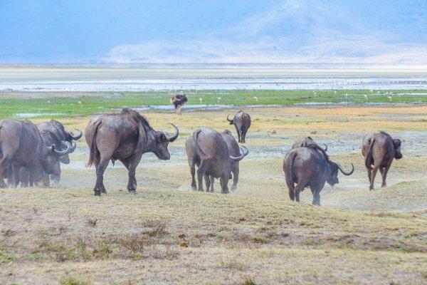 Моё путешествие по национальным паркам Танзании... - №21
