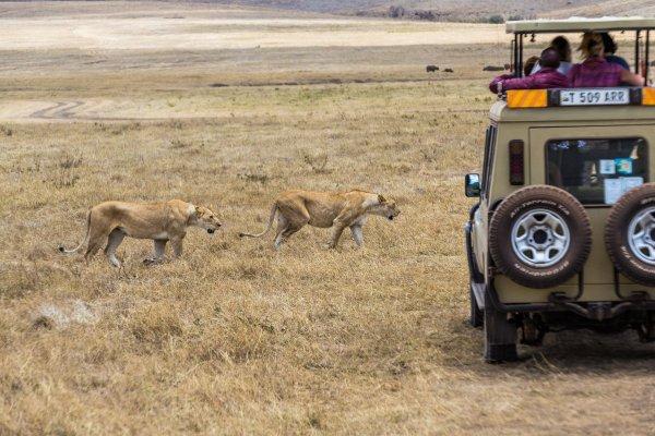 Моё путешествие по национальным паркам Танзании... - №25
