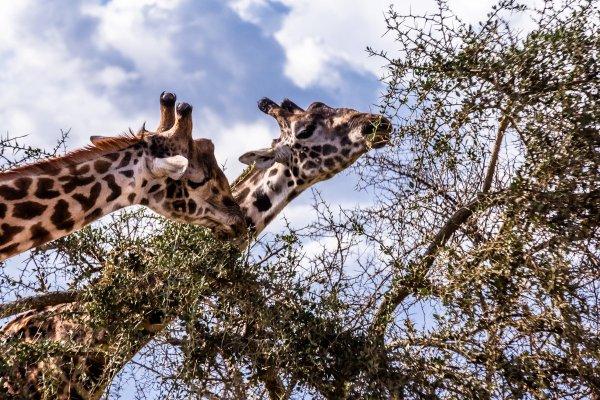 Моё путешествие по национальным паркам Танзании... - №37