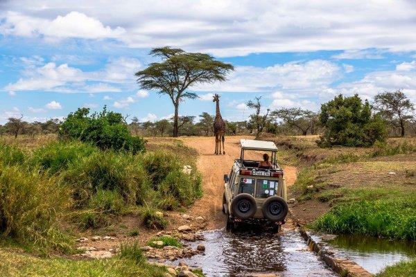 Моё путешествие по национальным паркам Танзании... - №41