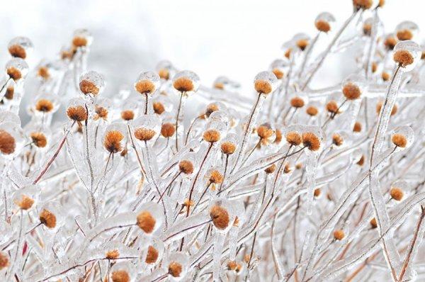 красота зимней природы
