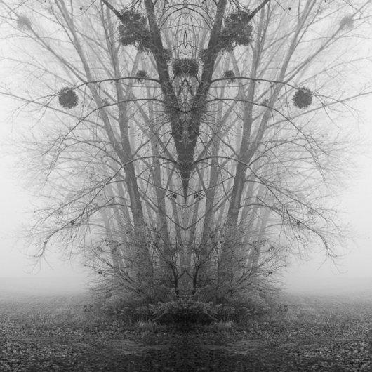 черно-белый пейзаж 9