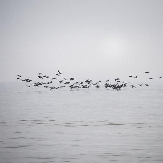 черно-белый пейзаж 13