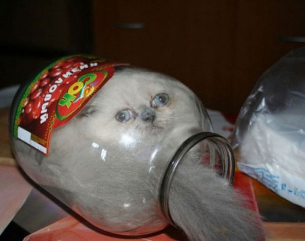 домашние кошки фото